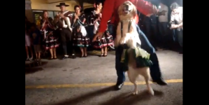 Dancing Merenga Dog