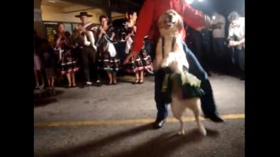 Dancing Merenga Dog